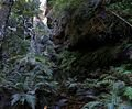 120px_rainforest_bluemountainsnsw.jpg
